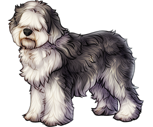Olde English Sheepdog